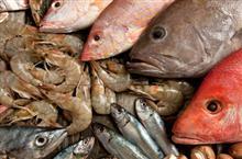 דגים, מהים אל הצלחת!